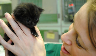 Tiny kitten found on London tube train