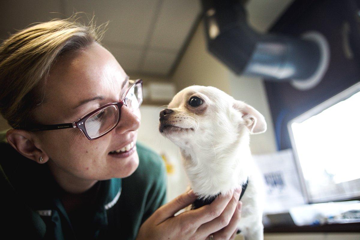 Animal Health Trust Video Thumbnail