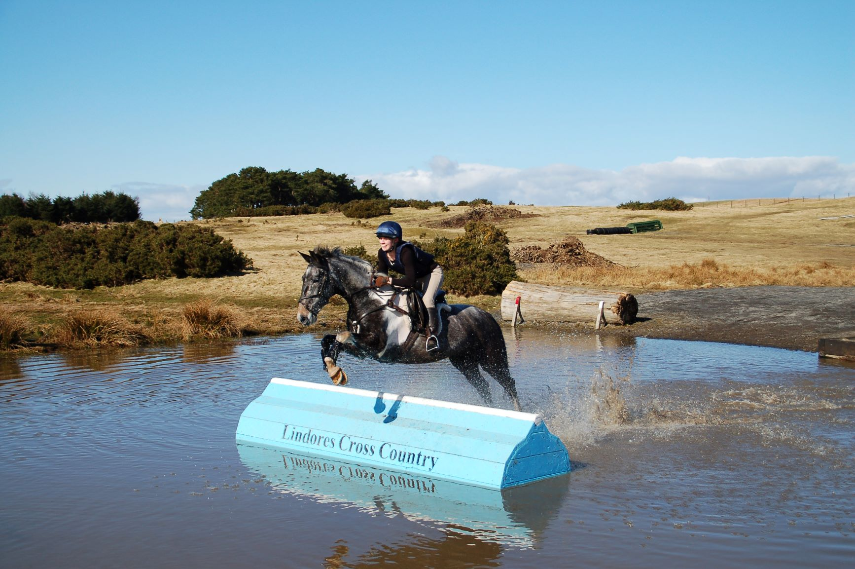 From frozen foal to sculpture trail muse – Lucas' transformation