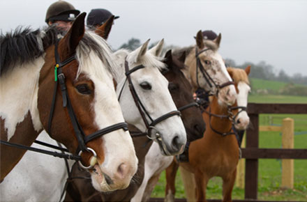 AHT help contain spread of Equine Flu
