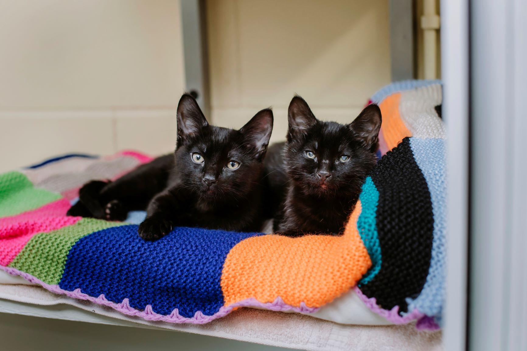 Tiny stray kitten saves sick brother's life