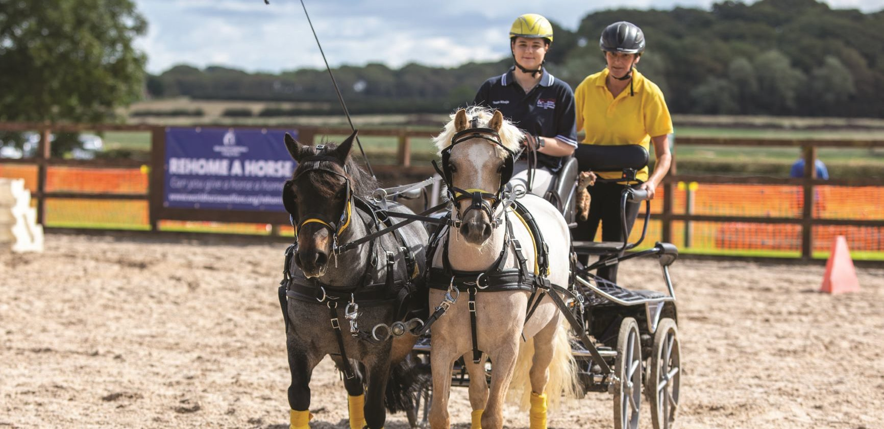 From forlorn pony to driving star!