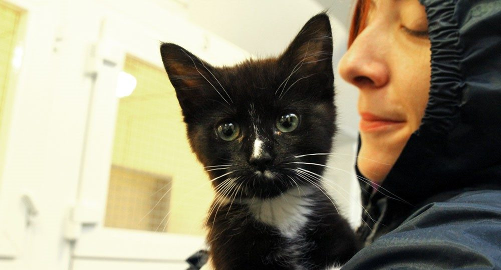 Flea-infested kitten found days away from death