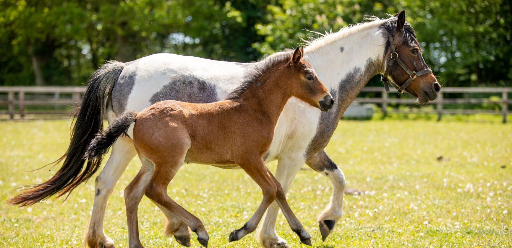Foal baby boom – why your support is so vital