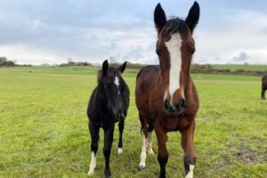 Buena makes friend with Izzy, another foal in World Horse Welfare's care.