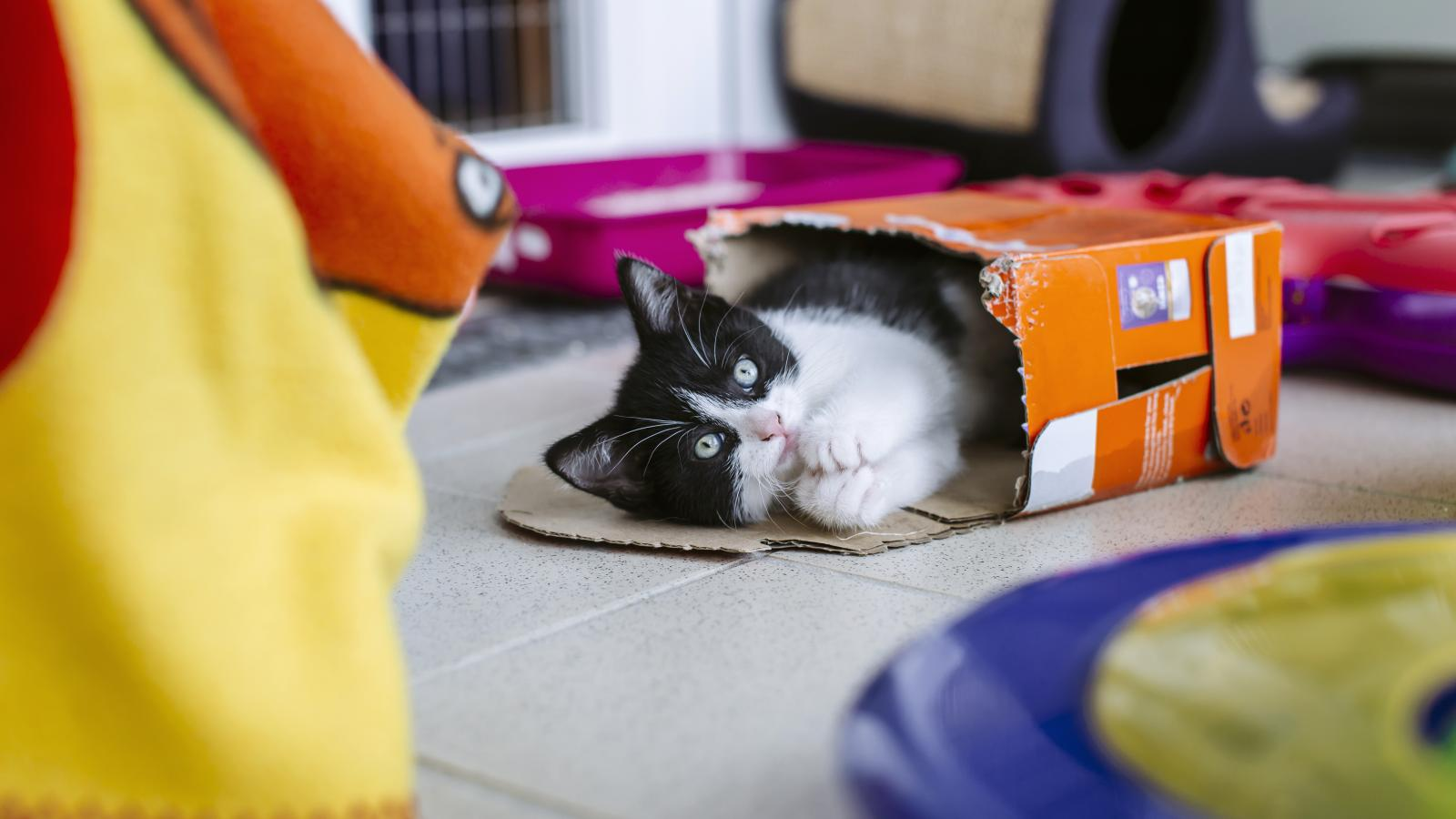 Paralysed kitten takes first steps