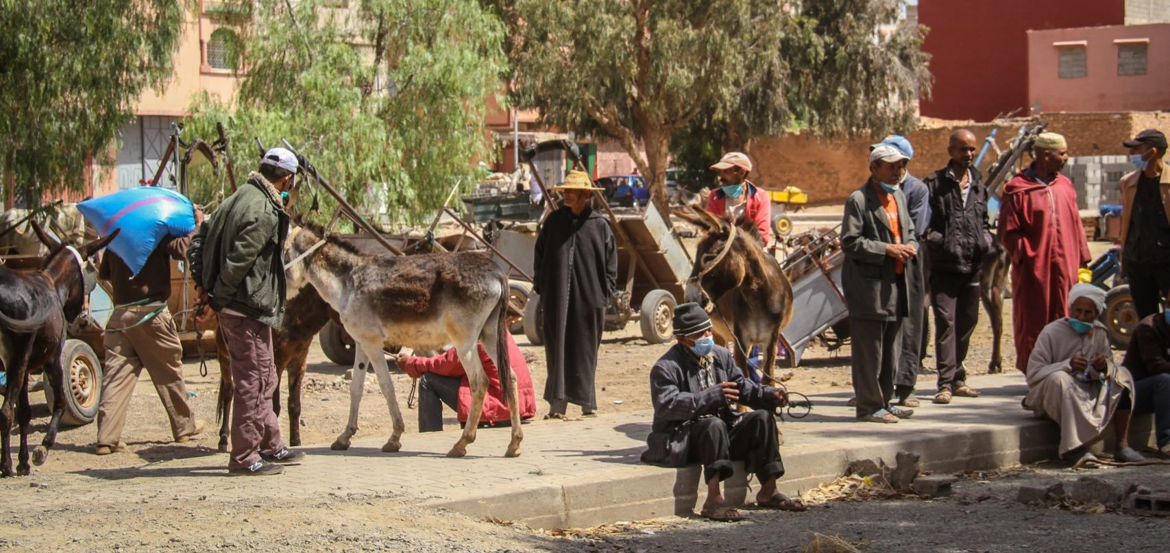 Providing a lifeline for working animals in Morocco