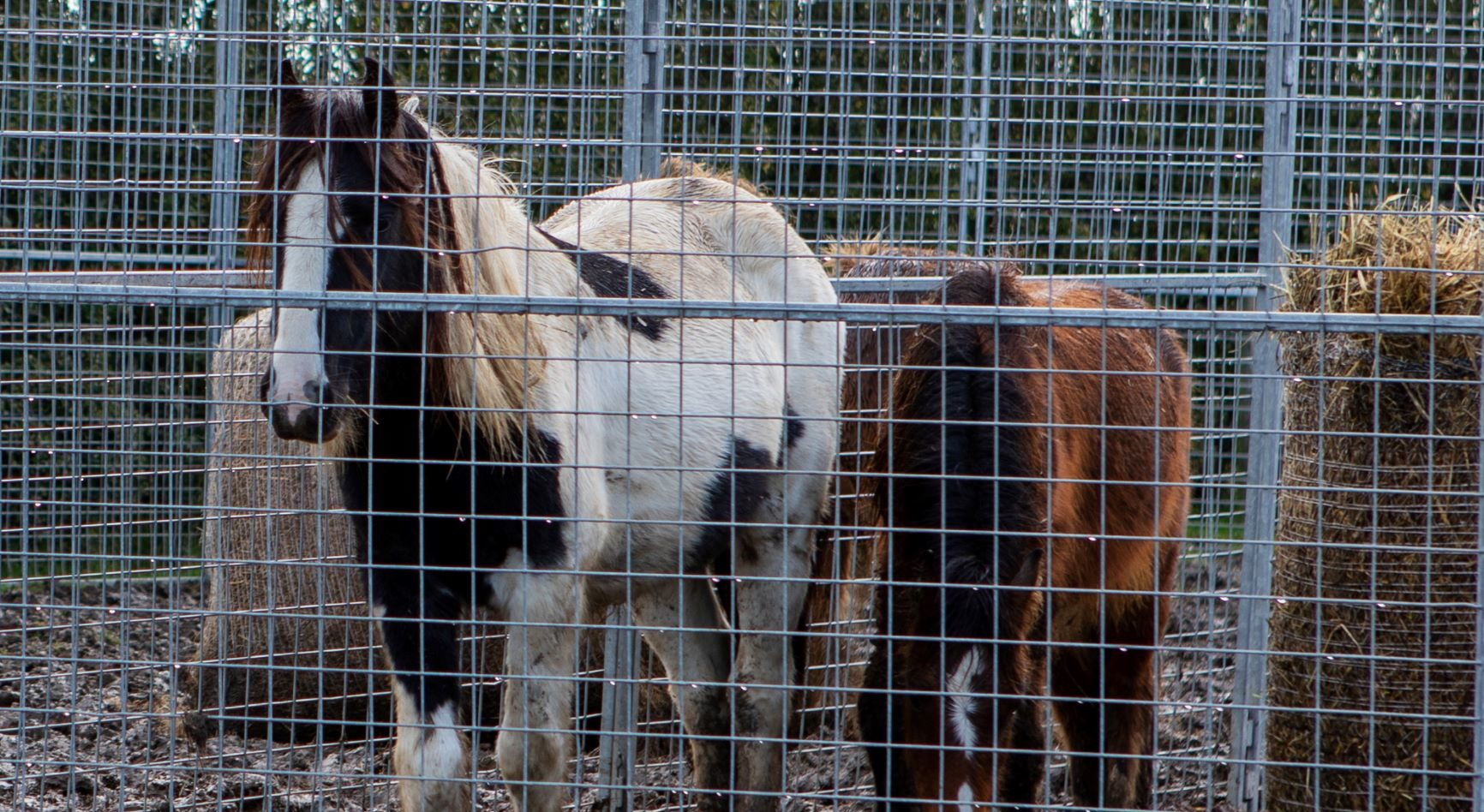 Teamwork enables charities to help over 70 horses on one site