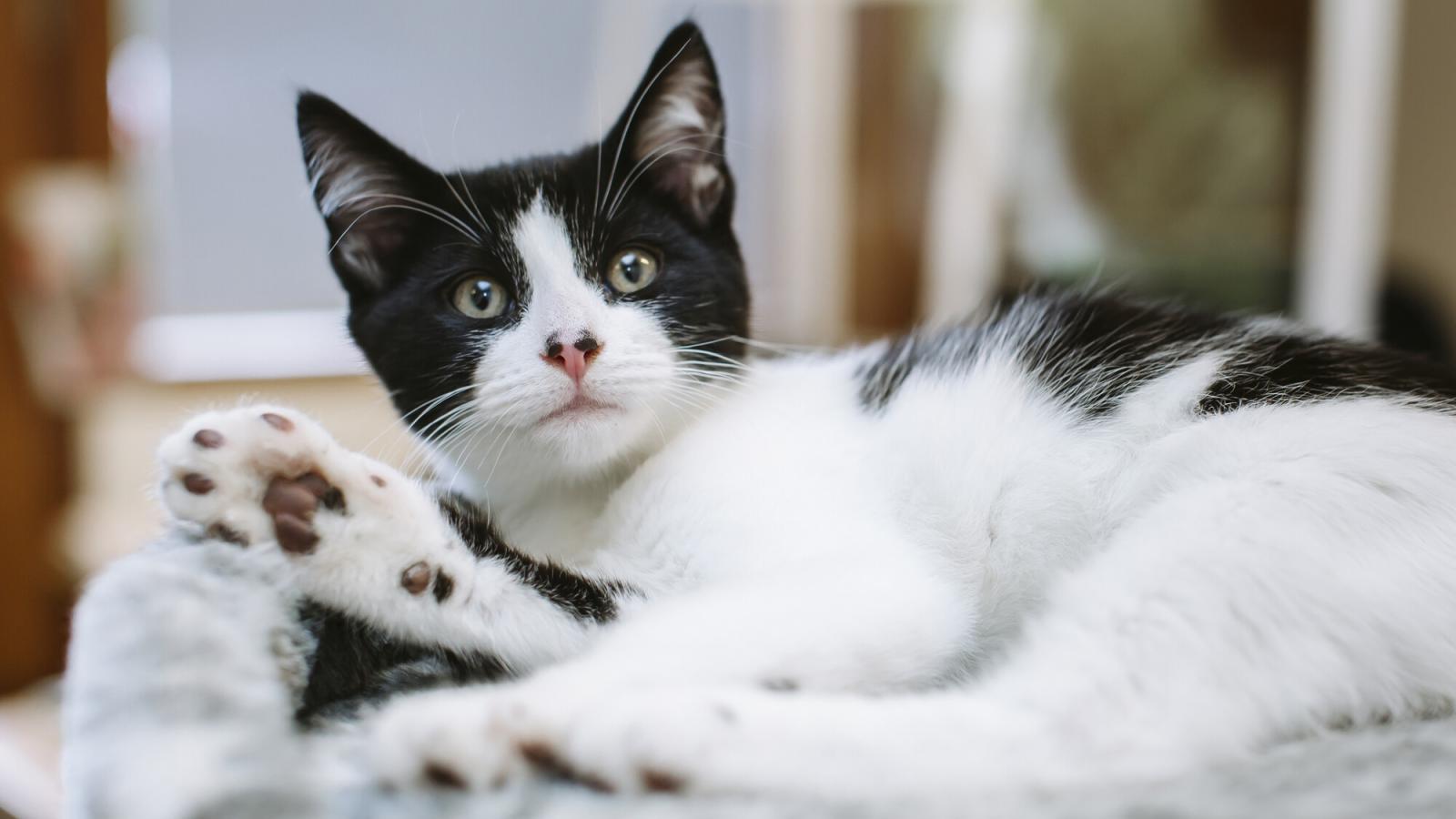 Kitten found abandoned in laundry basket