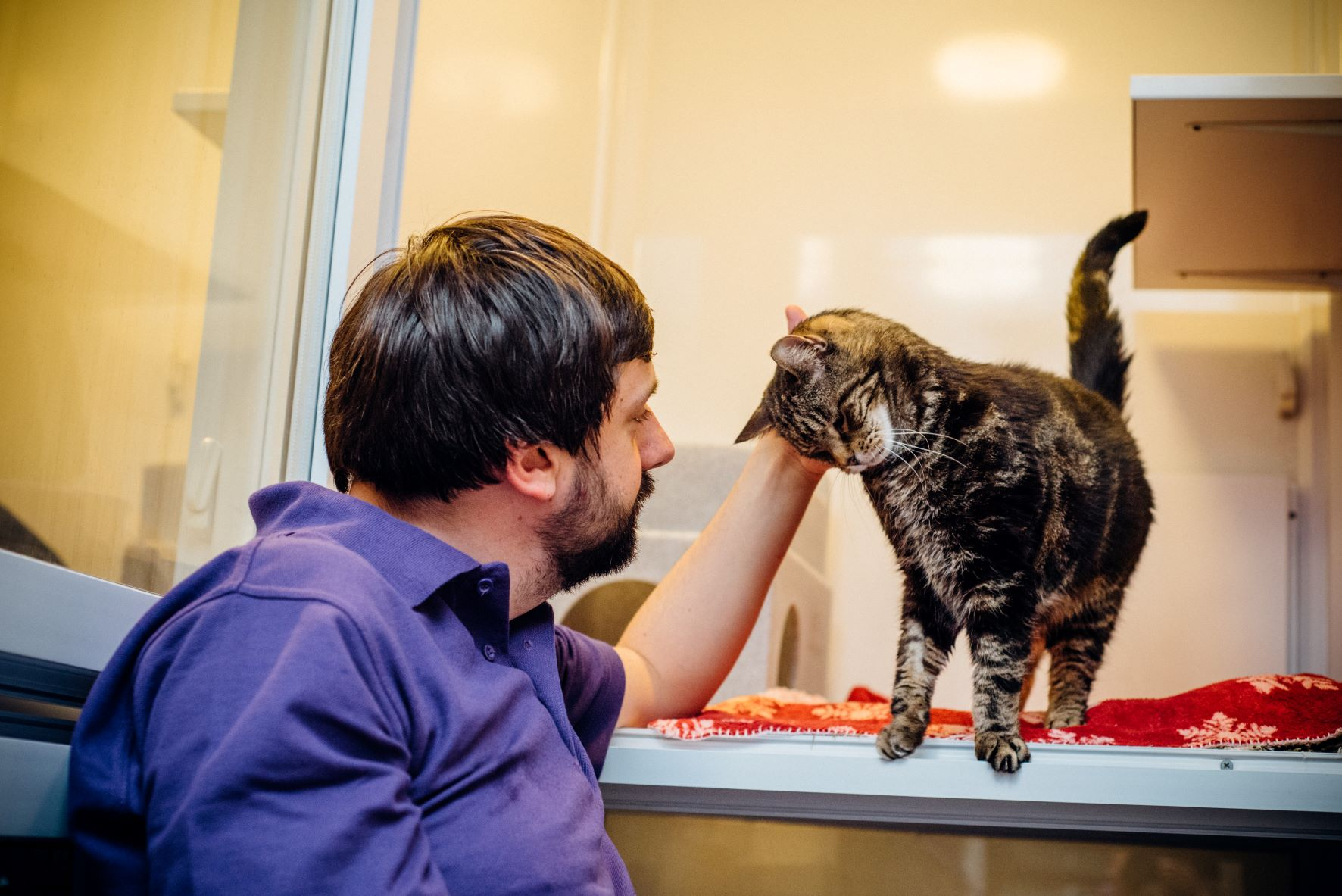 Going the extra mile for older cats