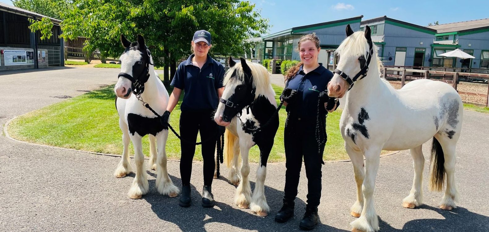 Rescued horses have a bright future ahead of them
